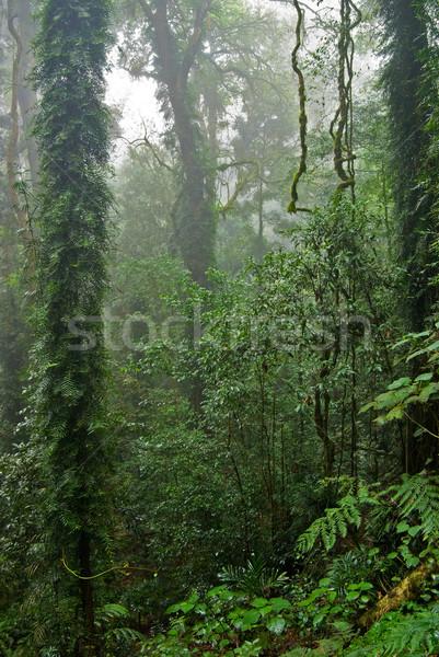 Esőerdő szépség természet világ örökség esőerdő Stock fotó © clearviewstock