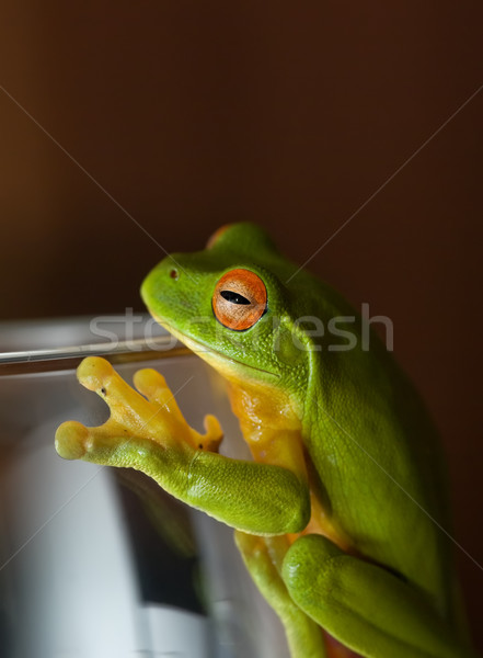 Stock photo: frog on glass