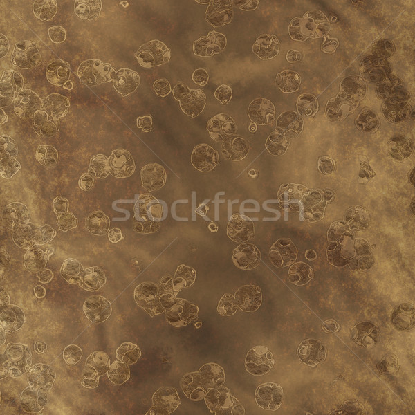 fossils Stock photo © clearviewstock