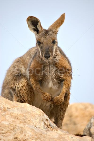 Citromsárga kő szép kép természet állat Stock fotó © clearviewstock