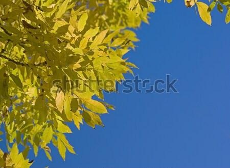 紅葉 フレーム 青空 ストックフォト © clearviewstock