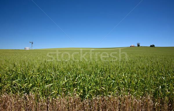 フィールド 小麦 古い家 風車 家 自然 ストックフォト © clearviewstock