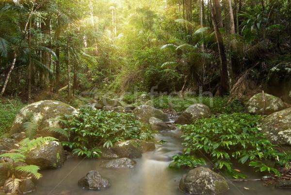 熱帯雨林 日光 日光 ストリーム 太陽 雨 ストックフォト © clearviewstock