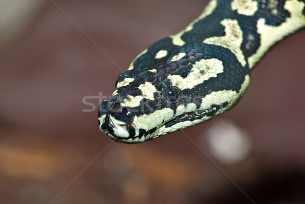 Python Nice jaune noir tapis Photo stock © clearviewstock