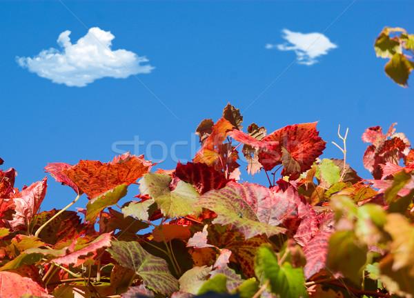 De uva vides cielo azul agradable imagen Foto stock © clearviewstock