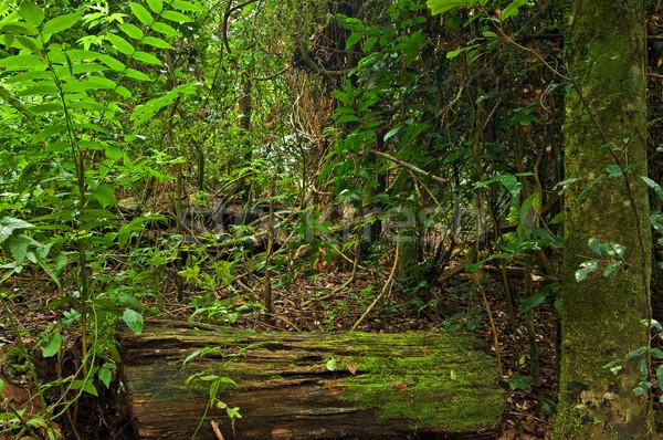 Stock photo: rain forest