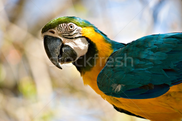 macaw looking back Stock photo © clearviewstock