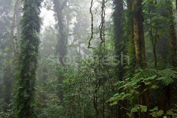 Rainforest güzellik doğa dünya miras Rainforest Stok fotoğraf © clearviewstock
