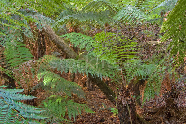 in the rainforest Stock photo © clearviewstock