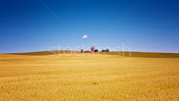 Farm mezők búza vidék Dél-Ausztrália mező Stock fotó © clearviewstock