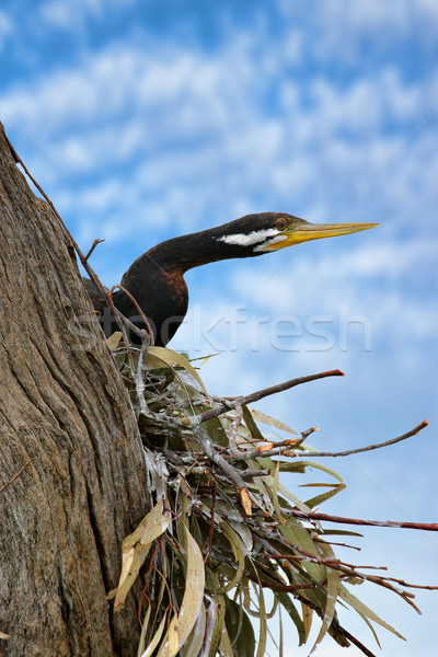 Oturma yuva kafa dışarı kuş anne Stok fotoğraf © clearviewstock