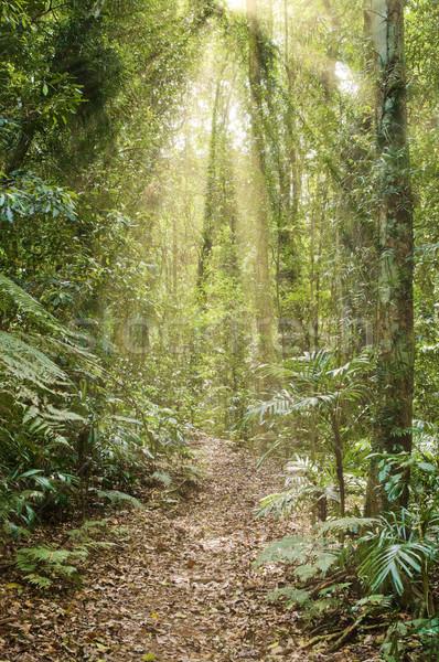 Raggi luce foresta pluviale immagine bellezza Foto d'archivio © clearviewstock