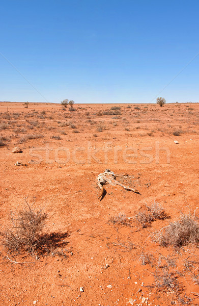 australian red desert Stock photo © clearviewstock