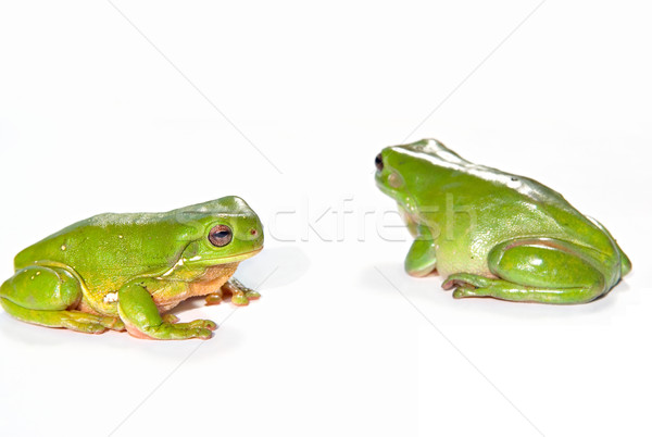 two green tree frogs Stock photo © clearviewstock