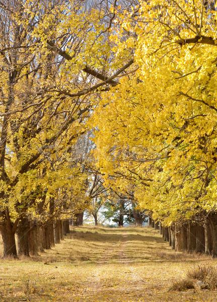 秋 秋 パス 田舎道 ニレ 木 ストックフォト © clearviewstock