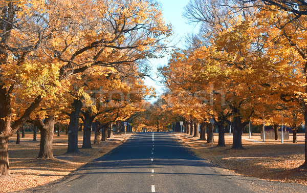 autumn country road Stock photo © clearviewstock
