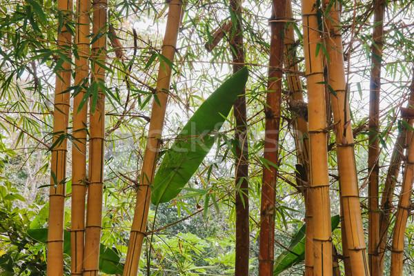 бамбук полюс деревья большой желтый Сток-фото © clearviewstock