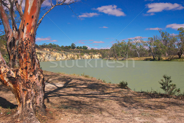Nehir kırmızı sakız Stok fotoğraf © clearviewstock