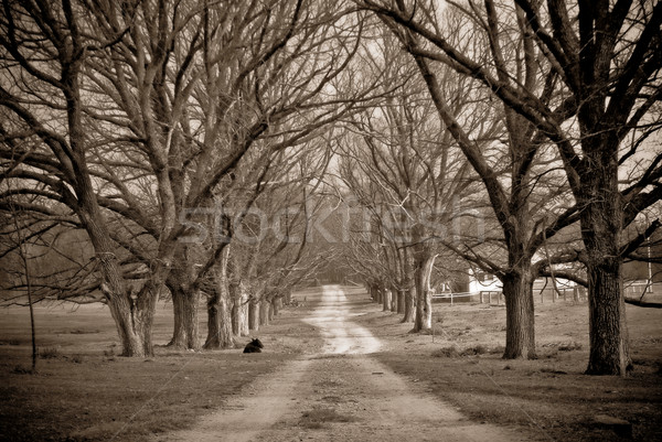 Estrada rural inverno preto e branco imagem primavera árvores Foto stock © clearviewstock