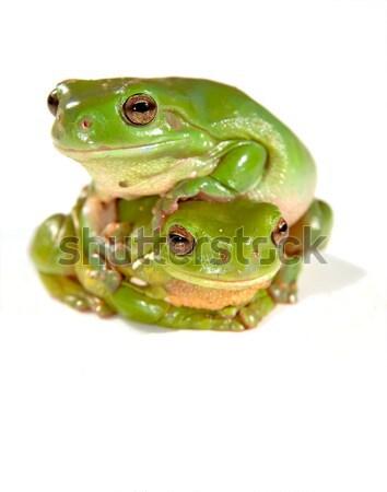Béka zöld fa fehér tudomás mosoly természet Stock fotó © clearviewstock