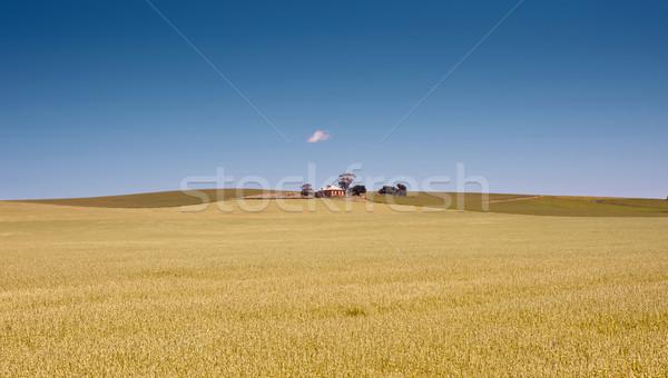 Foto stock: Fazenda · campos · trigo · sul · da · austrália · campo