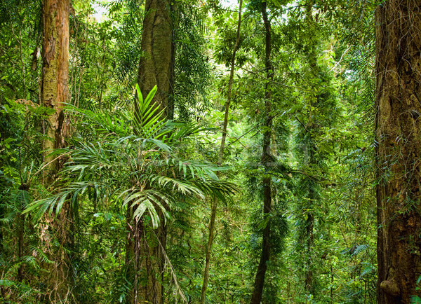 Güzel bitkiler ağaçlar rainforest dünya miras Stok fotoğraf © clearviewstock