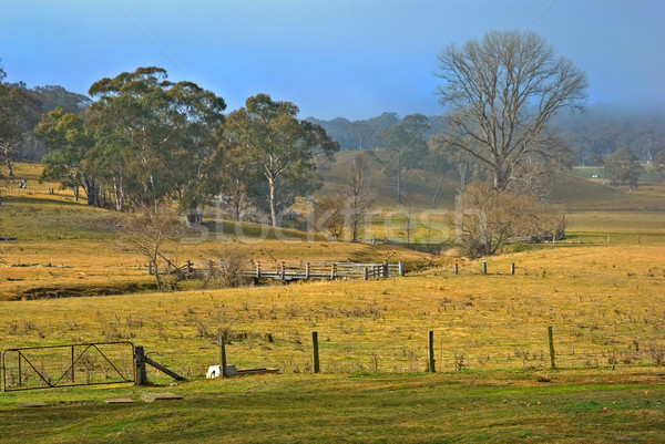 old farm Stock photo © clearviewstock