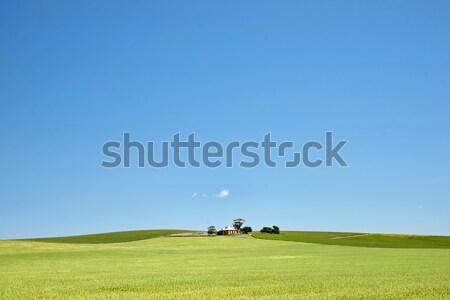 Fazenda campos trigo sul da austrália campo Foto stock © clearviewstock