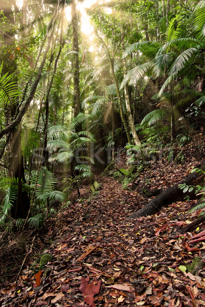 rainforest path Stock photo © clearviewstock