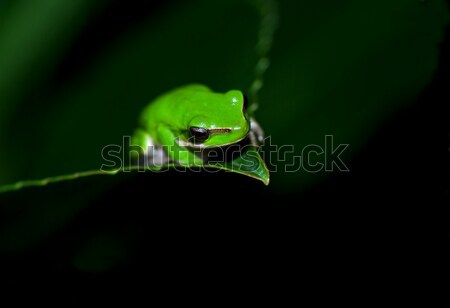 little frog in contemplation Stock photo © clearviewstock