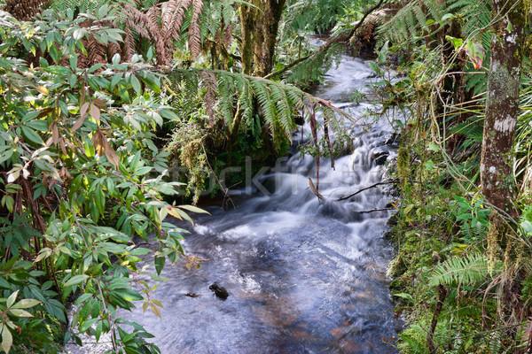 Esőerdő folyam gyönyörű kicsi folyó esőerdő Stock fotó © clearviewstock