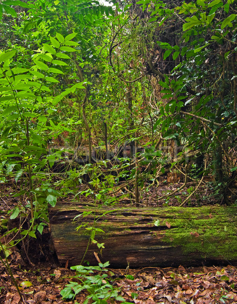 rain forest Stock photo © clearviewstock