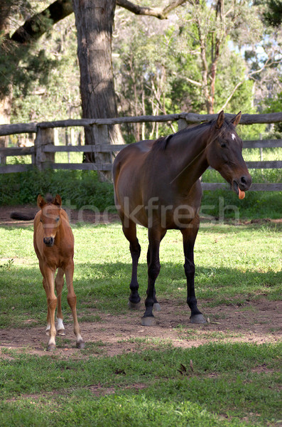 was that you? horse and foal Stock photo © clearviewstock