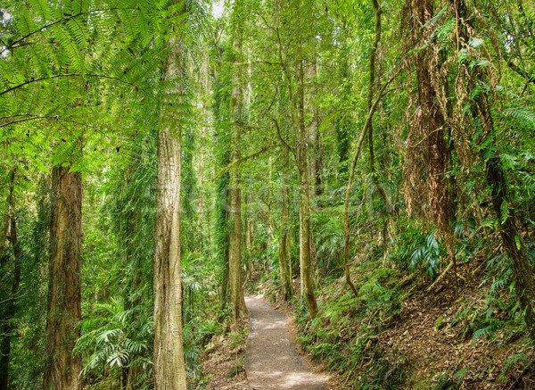 Selva tropical imagen camino agua árbol Foto stock © clearviewstock