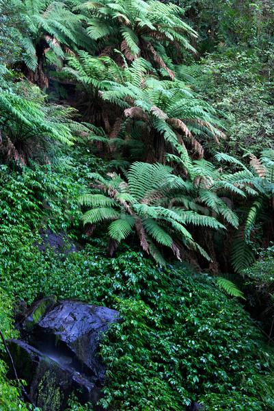 Rainforest świat dziedzictwo paprocie roślin skał Zdjęcia stock © clearviewstock