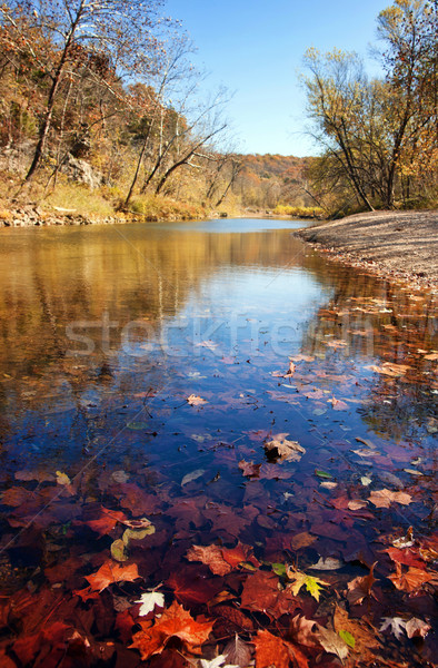 Stock photo: autumn leaves in the water