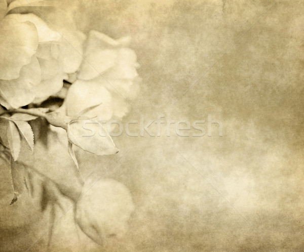 old paper with roses Stock photo © clearviewstock