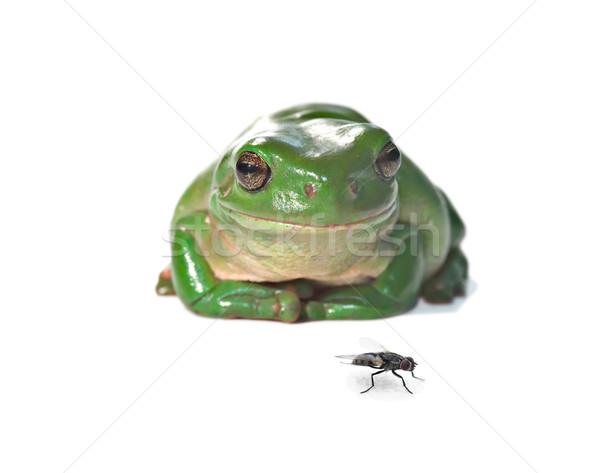 Uçmak kurbağa yalıtılmış beyaz Stok fotoğraf © clearviewstock