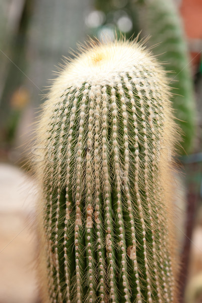 cacti plants Stock photo © clearviewstock