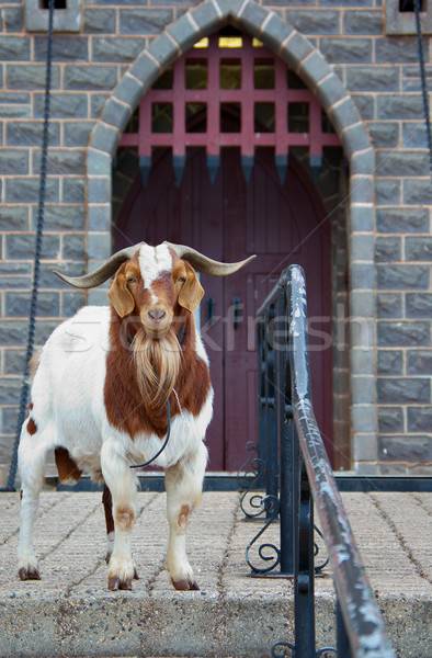 guard goat Stock photo © clearviewstock