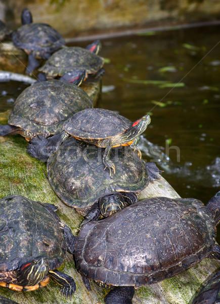 край ждет толпа животные оболочки живая природа Сток-фото © clearviewstock