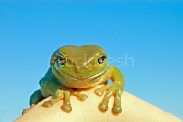hmm tree frog Stock photo © clearviewstock