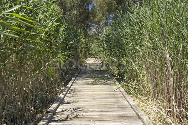 boardwalk Stock photo © clearviewstock