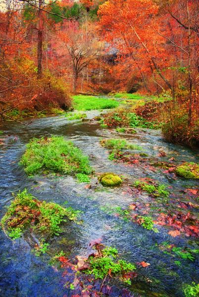 Automne printemps Missouri automne écouter arbres Photo stock © clearviewstock