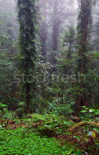 Selva tropical belleza naturaleza mundo patrimonio selva Foto stock © clearviewstock