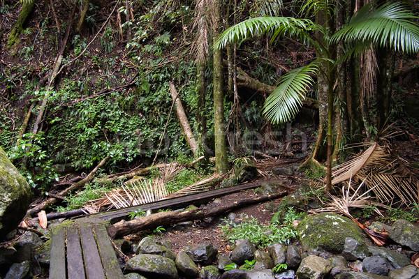 Regenwoud mooie natuur grens noordelijk bos Stockfoto © clearviewstock