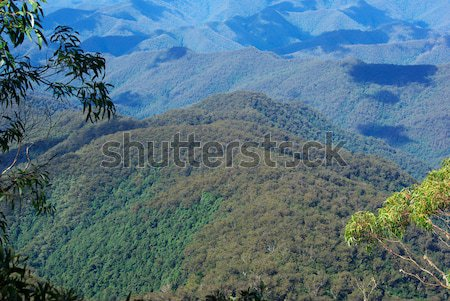 two forests merging Stock photo © clearviewstock