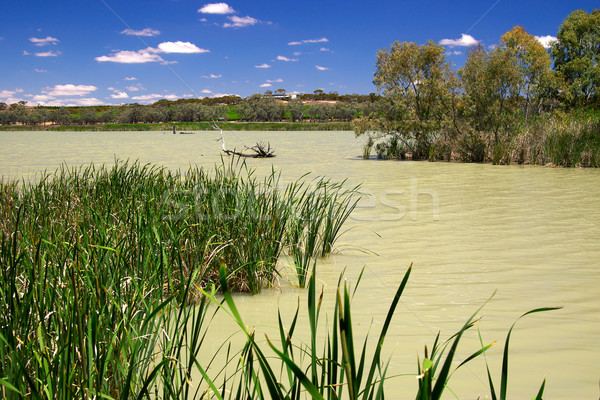 wetlands Stock photo © clearviewstock
