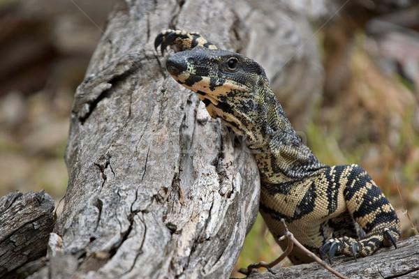 Elvesz törik csipke monitor pihen természet Stock fotó © clearviewstock