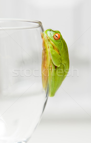 Stock photo: green tree frog on glass